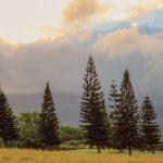 ha_trees-937316_1920