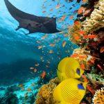 diving_sharm_el_sheikh_360_65ca0_lg