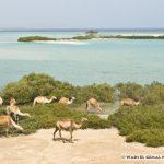 wadi-el-gemal_88970