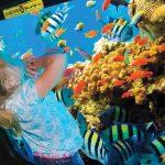 Semi-Submarine-Tour-in-Hurghada
